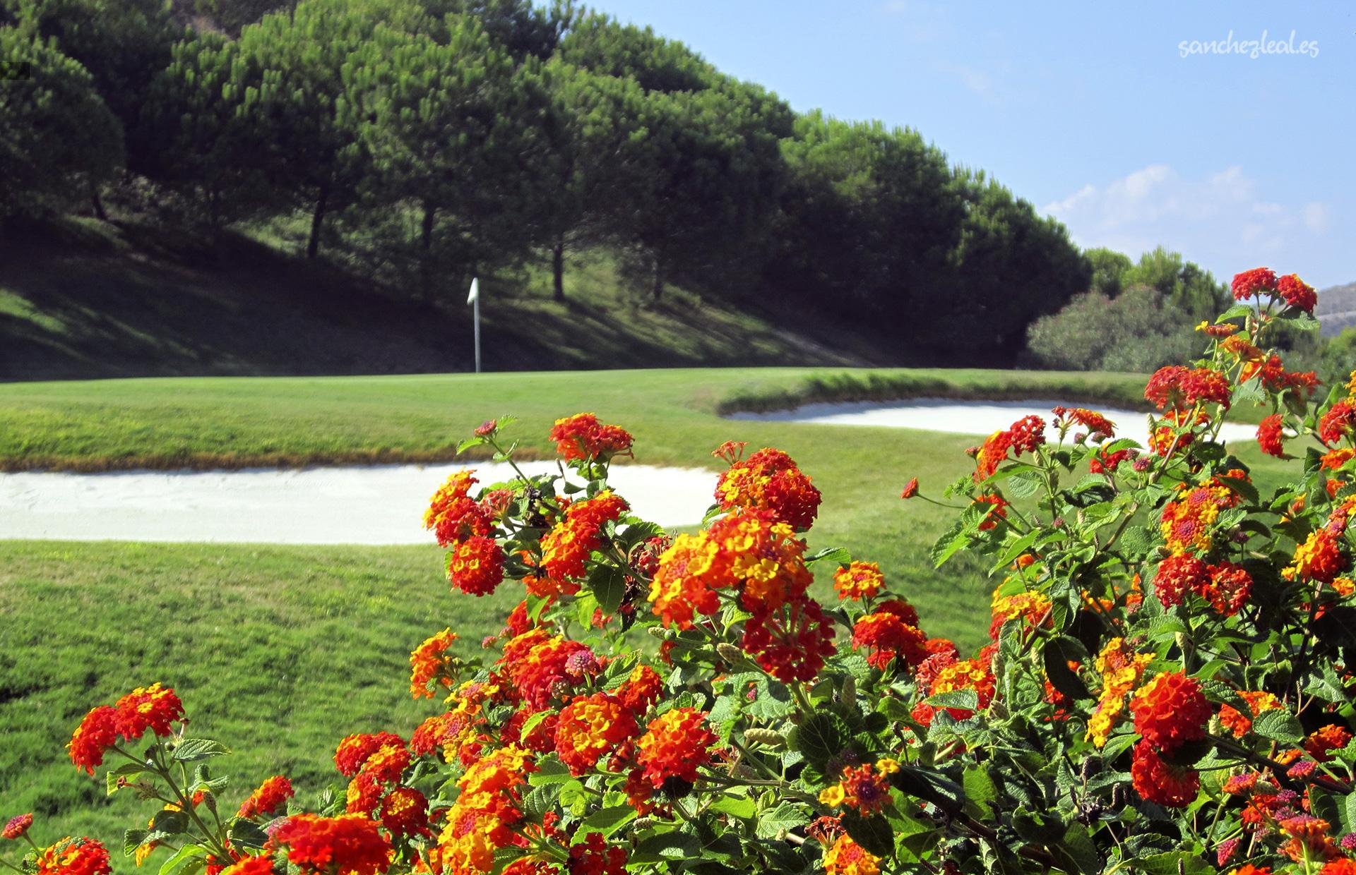 green-hoyo-3-dona_julia_golf_costa_del_sol